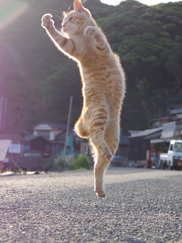 Кот танцующий картинки